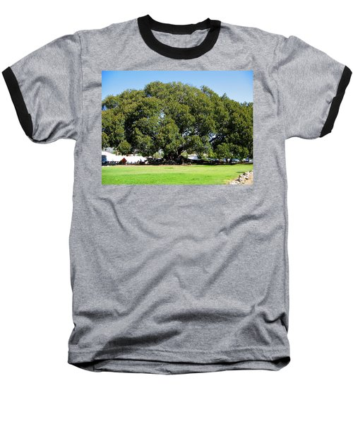 Moreton Fig Tree In Santa Barbara Baseball T-Shirt