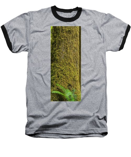 Moss Covered Tree Olympic National Park Baseball T-Shirt by Steve Gadomski