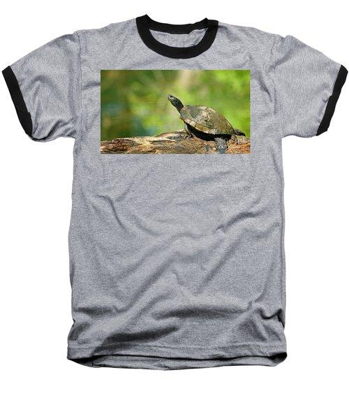 Mossy Turtle Baseball T-Shirt
