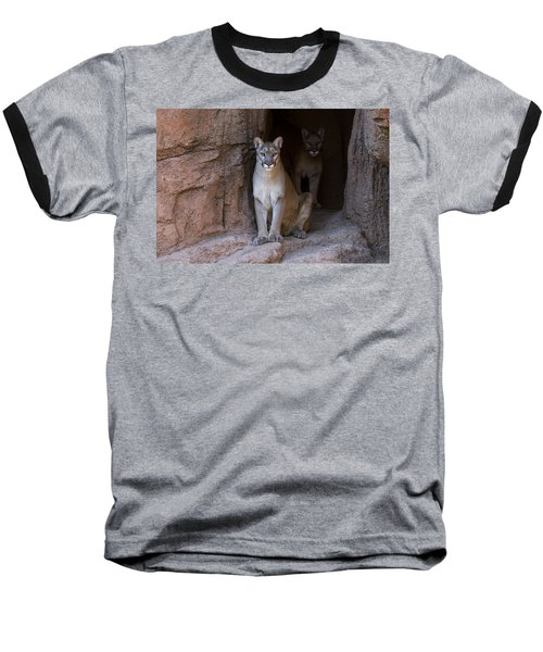 Baseball T-Shirt featuring the photograph Mountain Lion 1 by Arterra Picture Library