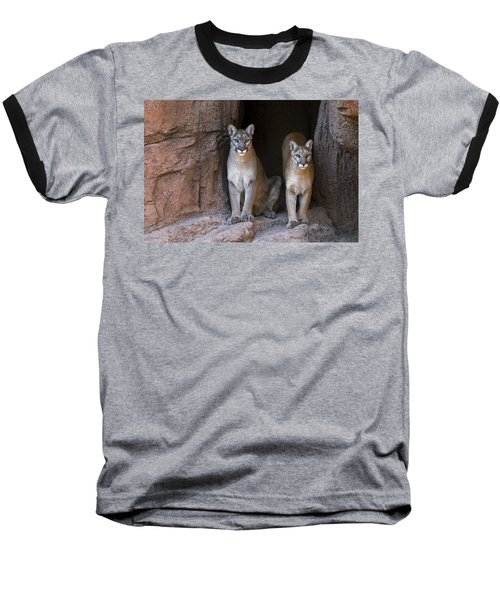 Baseball T-Shirt featuring the photograph Mountain Lion 2 by Arterra Picture Library
