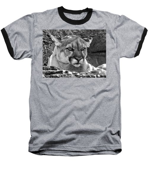 Mountain Lion Bergen County Zoo Baseball T-Shirt
