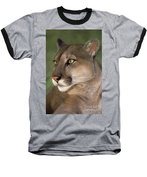 Mountain Lion Portrait Wildlife Rescue Baseball T-Shirt by Dave Welling