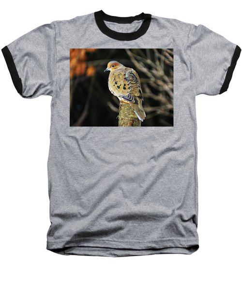 Mourning Dove On Post Baseball T-Shirt by MTBobbins Photography