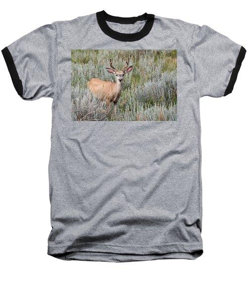 Mule Deer Baseball T-Shirt