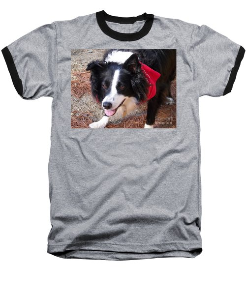 Female Border Collie Baseball T-Shirt by Eunice Miller