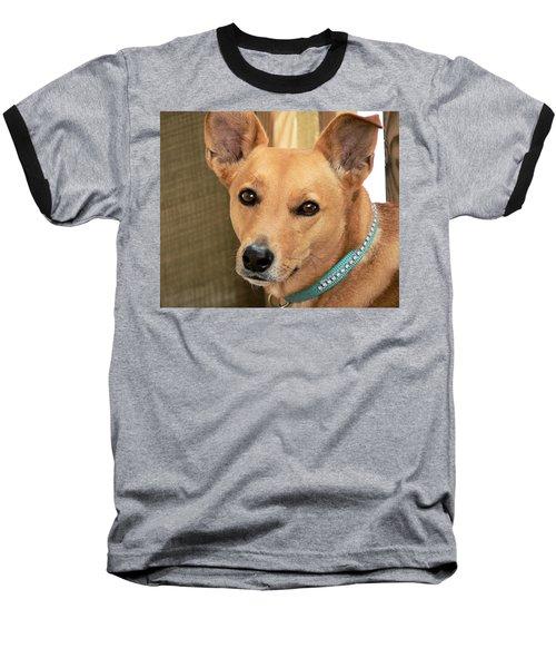 Dog - Cookie One Baseball T-Shirt