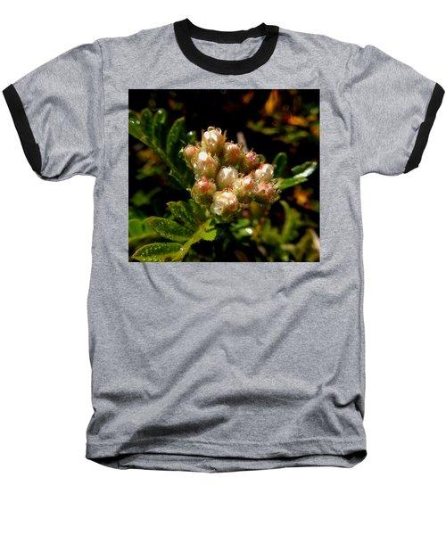 Nature's Drink Baseball T-Shirt by Pamela Walton