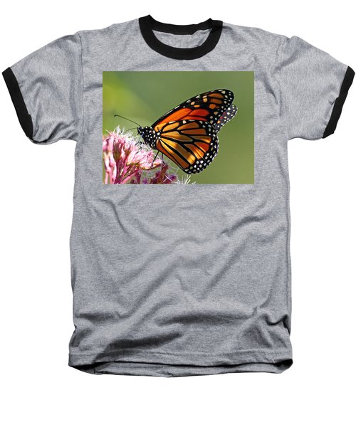 Nectaring Monarch Butterfly Baseball T-Shirt by Debbie Oppermann