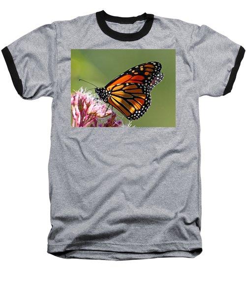 Nectaring Monarch Butterfly Baseball T-Shirt