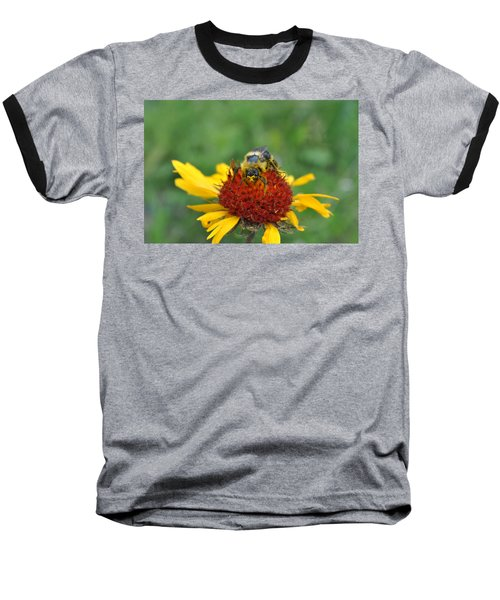 Need More Pollen Baseball T-Shirt by Jim Hogg