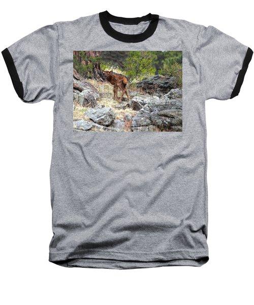 Newborn Elk Calf Baseball T-Shirt