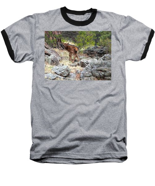 Newborn Elk Calf Baseball T-Shirt