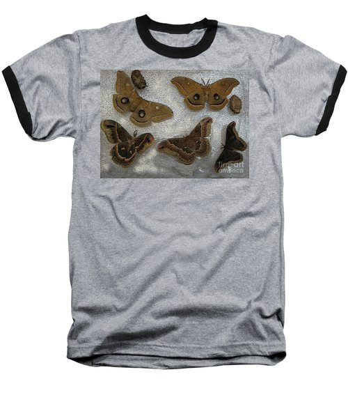 North American Large Moth Collection Baseball T-Shirt