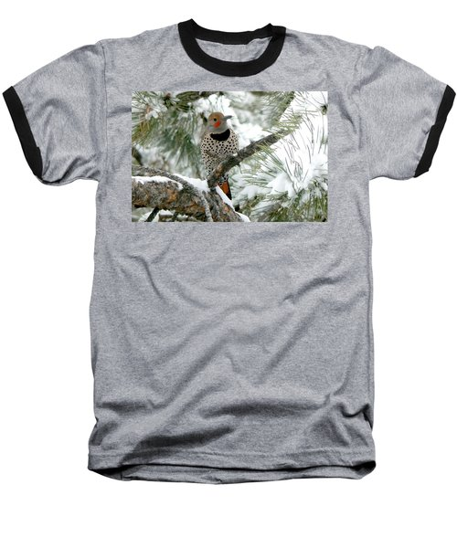 Northern Flicker On Snowy Pine Baseball T-Shirt