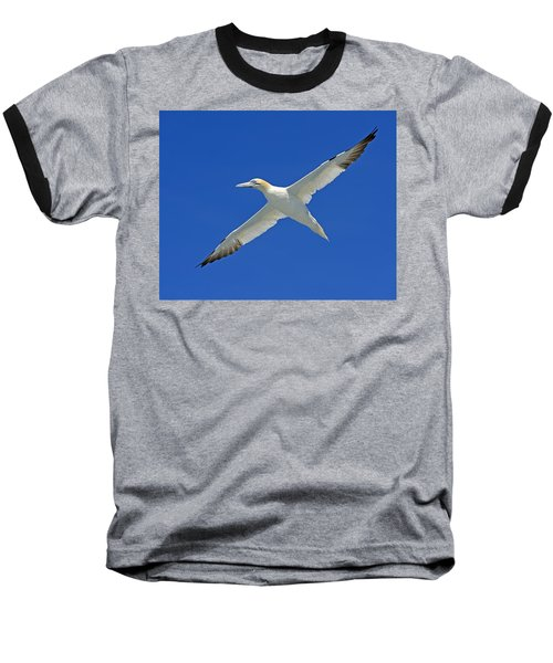 Northern Gannet Baseball T-Shirt by Tony Beck