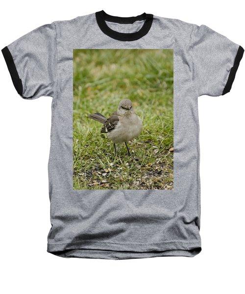 Northern Mockingbird Baseball T-Shirt by Heather Applegate