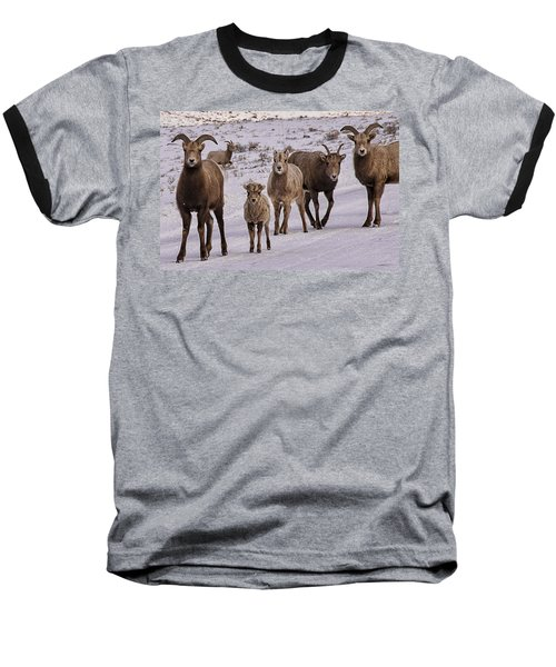 Baseball T-Shirt featuring the photograph Not Too Sheepish by Priscilla Burgers