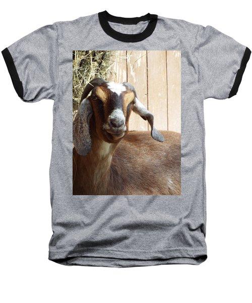 Nubian Goat Baseball T-Shirt