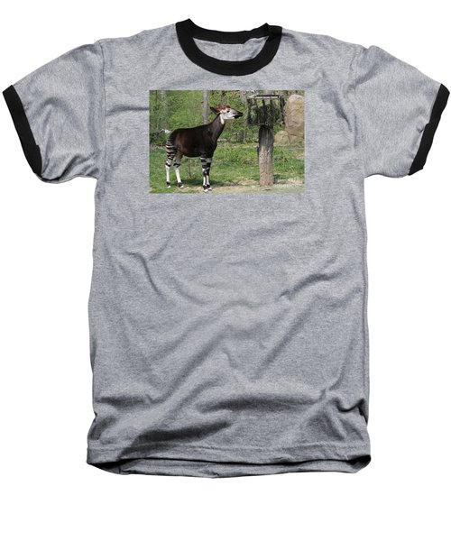Okapi Baseball T-Shirt by Judy Whitton