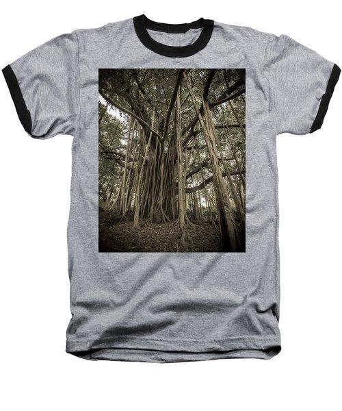 Old Banyan Tree Baseball T-Shirt