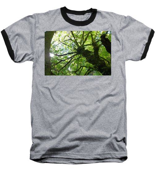 Old Growth Tree In Forest Baseball T-Shirt