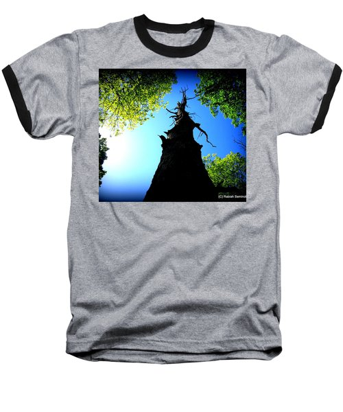 Old Trees Baseball T-Shirt
