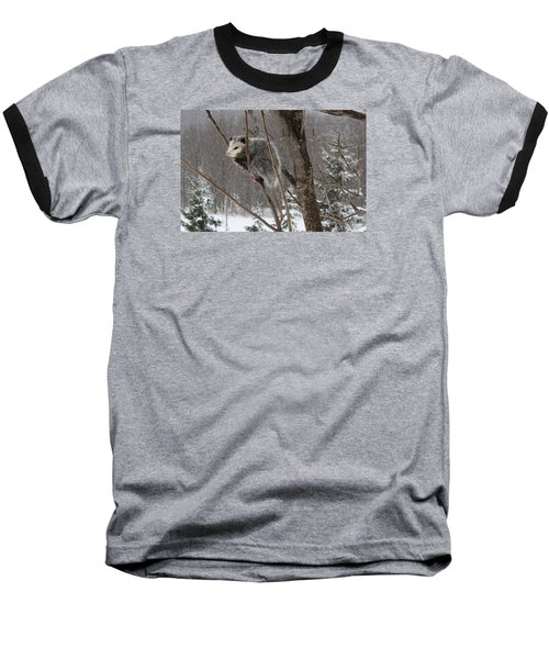 Opossum In A Tree Baseball T-Shirt
