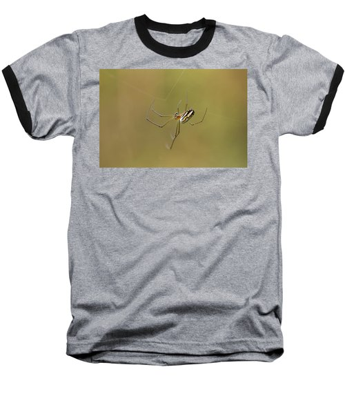 Orchard Spider Baseball T-Shirt by Greg Allore