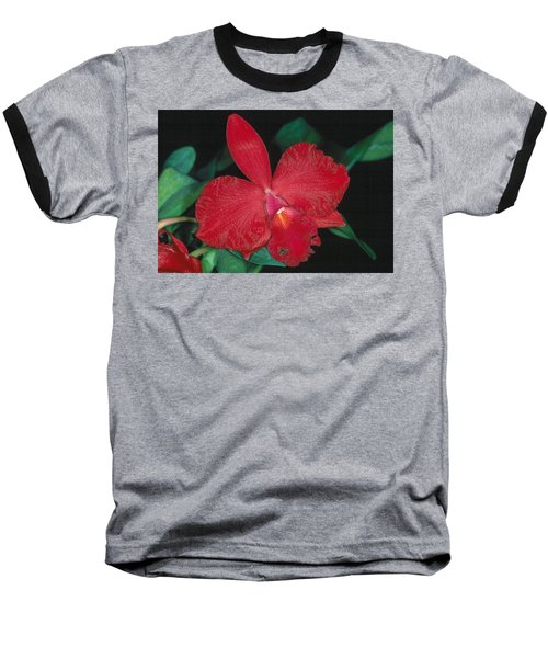 Orchid 12 Baseball T-Shirt by Andy Shomock