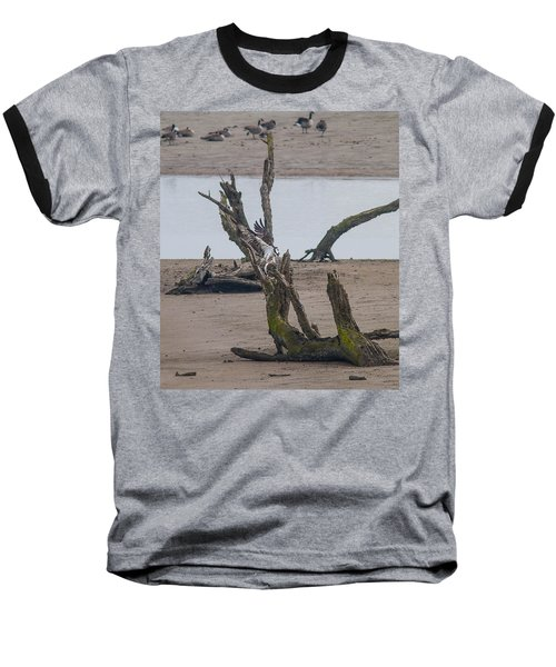 Ospray With Fish Baseball T-Shirt by Brian Williamson
