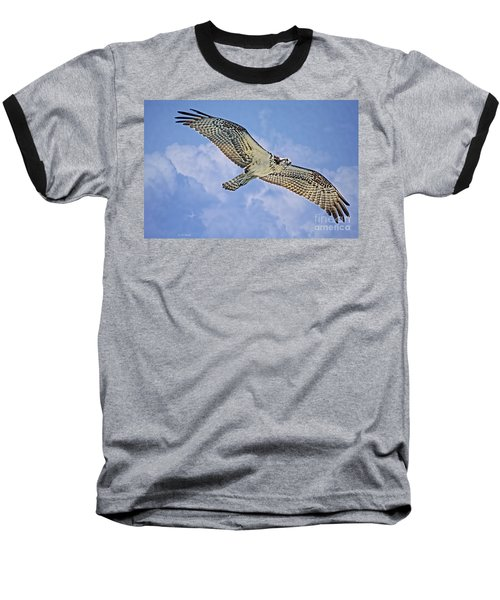 Osprey 91711 Baseball T-Shirt by Deborah Benoit