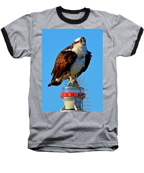 Baseball T-Shirt featuring the photograph Osprey Close-up On Water Navigation Aid by Jeff at JSJ Photography