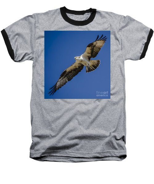 Baseball T-Shirt featuring the photograph Osprey In Flight by Dale Powell