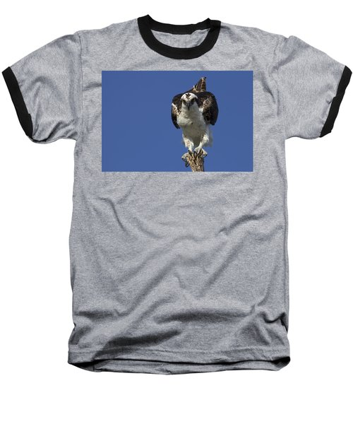 Osprey Photo Baseball T-Shirt