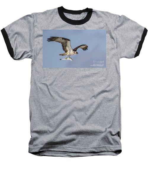 Osprey With Dinner Baseball T-Shirt