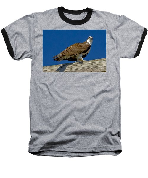 Baseball T-Shirt featuring the photograph Osprey With Fish In Talons by Dale Powell