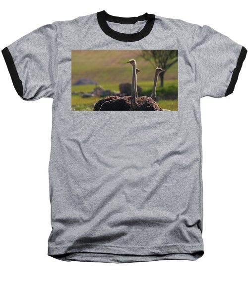 Ostriches Baseball T-Shirt by Dan Sproul