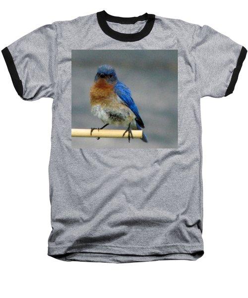 Our Own Mad Bluebird Baseball T-Shirt by Betty Pieper