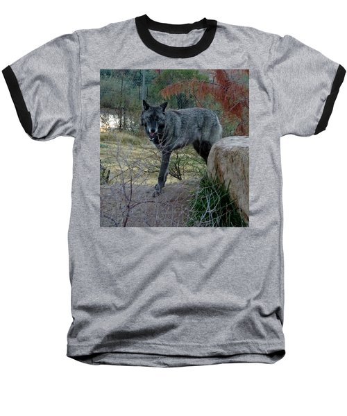 Out Of Africa Black Wolf Baseball T-Shirt