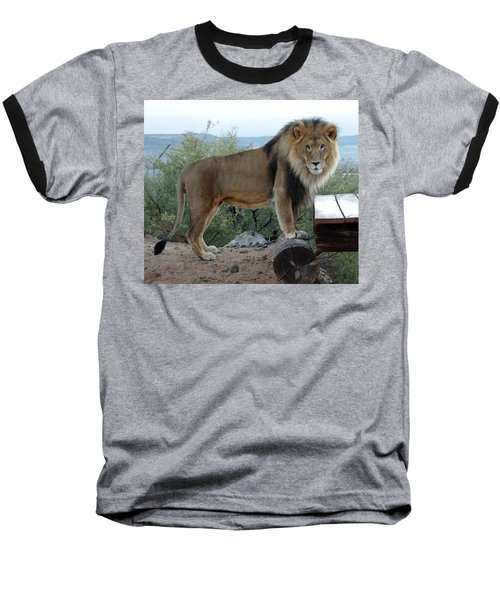 Out Of Africa  Lion 1 Baseball T-Shirt