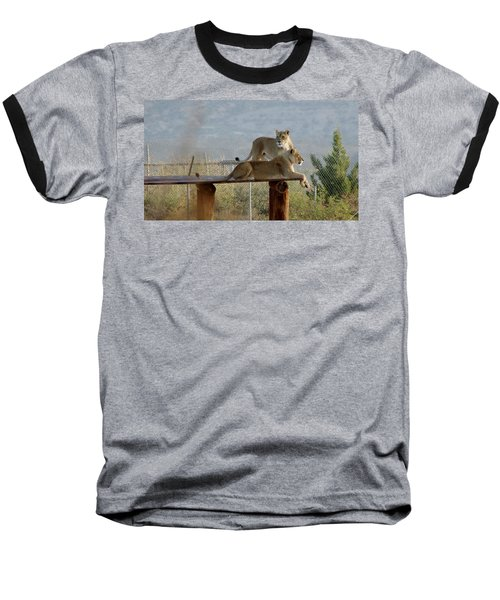 Out Of Africa Lions Baseball T-Shirt
