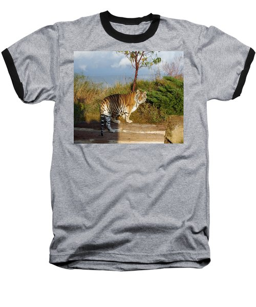 Out Of Africa  Tiger 1 Baseball T-Shirt