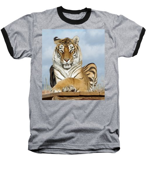 Out Of Africa Tiger 3 Baseball T-Shirt