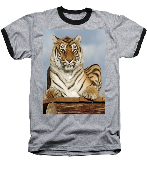 Out Of Africa Tiger 4 Baseball T-Shirt
