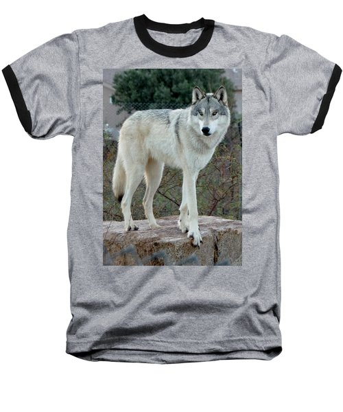 Out Of Africa Wolf  Baseball T-Shirt