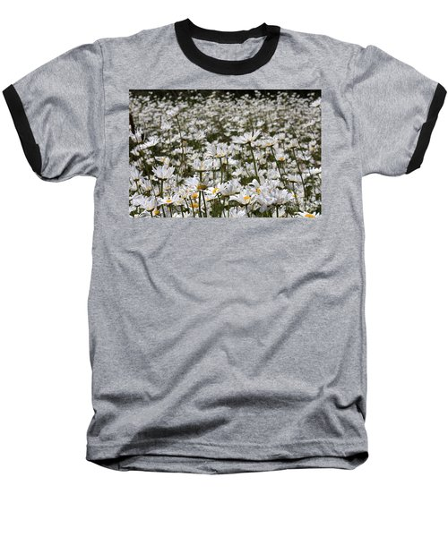 Ox Eye Daisies Baseball T-Shirt