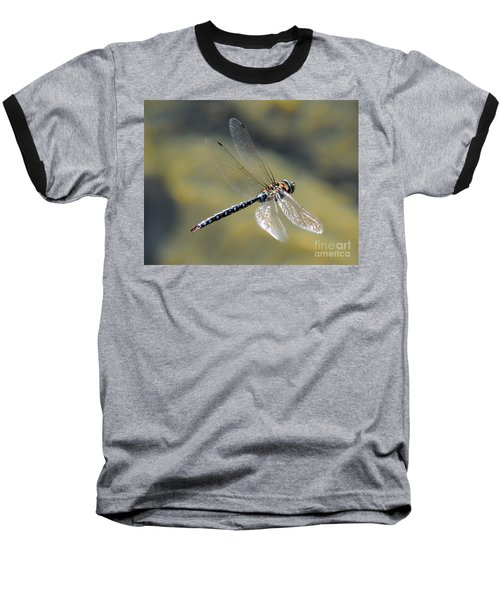 Paddletail Darner In Flight Baseball T-Shirt by Vivian Christopher