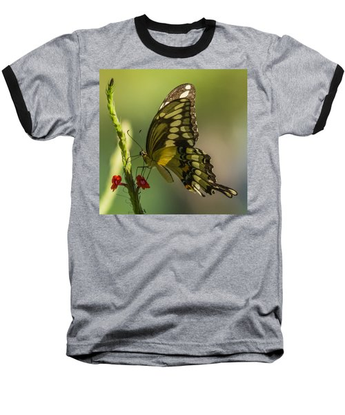 Baseball T-Shirt featuring the photograph Palamedes Swallowtail by Jane Luxton