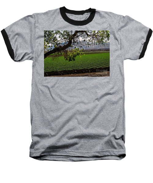 Panoramic Of Winter Lettuce Baseball T-Shirt by Robert Bales